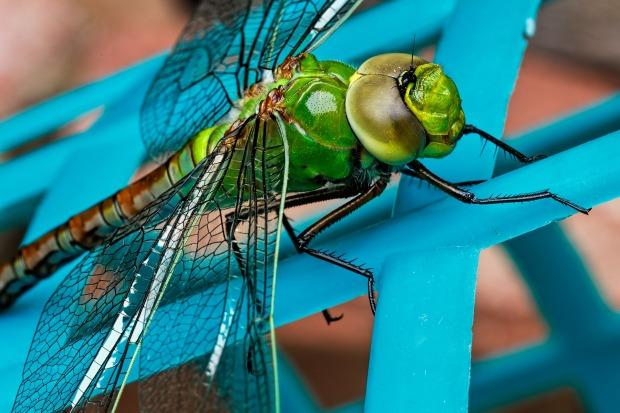 dragonfly-441624_1920.jpg